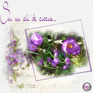 Sur un air de crocus ....