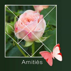 6-REALISATION - AMITIES