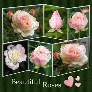2-REALISATION - BEAUTIFUL ROSES