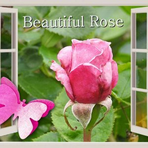 2-REALISATION - BEAUTIFUL ROSE