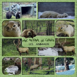 parc national du canada les animaux.jpg