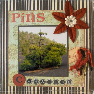 Pin des Canaries